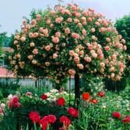 florenced275180's profile photo