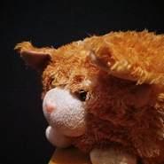 gatinc's profile photo
