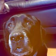 chase006521's profile photo