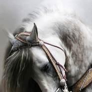 rokaa378's profile photo