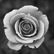 rihabr251076's profile photo