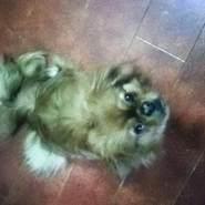 lapo2018's profile photo