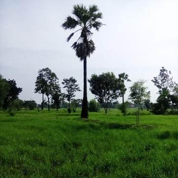 sunshine375967_Nonthaburi_Độc thân_Nữ