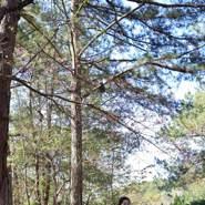 tinhle950755's profile photo