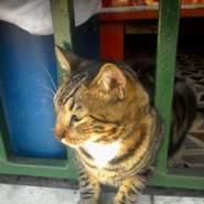luisfernandogomezcha's profile photo