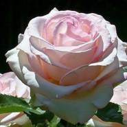 tenhaasiq337100's profile photo