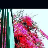 ahmads830799's profile photo