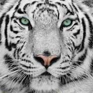 sidrai1's profile photo