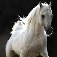 mostafaa660782's profile photo