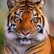 mahmoud344069's profile photo