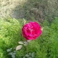 alil729530's profile photo