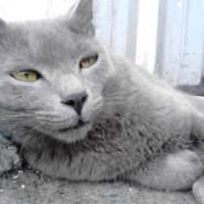 armen679172's profile photo