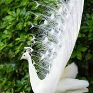muhammada111871's profile photo