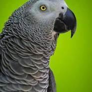 aaly500100's profile photo