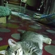 rezap961's profile photo