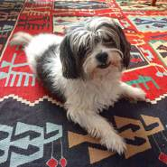 welshgraham4's profile photo