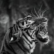 necaaam's profile photo