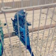 alaaa794004's profile photo