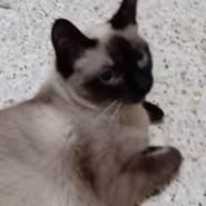 nawelaya7's profile photo