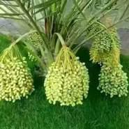 mushtaqa957130's profile photo