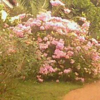 mohamadf510188_Western Province_Single_Weiblich
