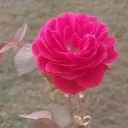 shakirh809818's profile photo