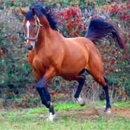 khaldim695284's profile photo