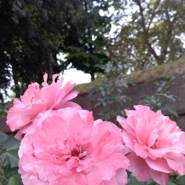 sara789734's profile photo