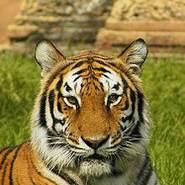 luaia57801's profile photo