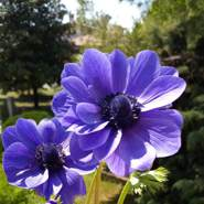 oleksandra908852's profile photo