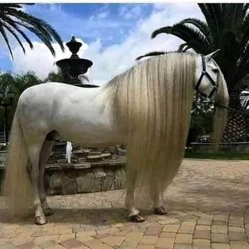 myn1568_Casablanca-Settat_Alleenstaand_Man