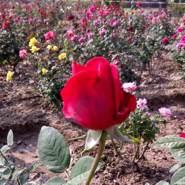 surujs625863's profile photo