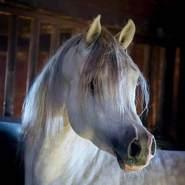 hussie80er's profile photo