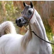 mousas398286's profile photo