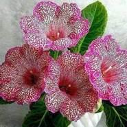 abdulg619960's profile photo