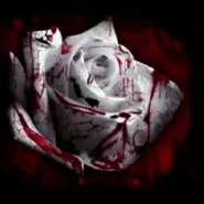 aasmaa304668's profile photo