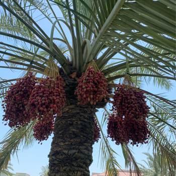 aziz793647_Al Muharraq_Single_Male