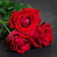 alqamar983528's profile photo