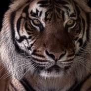 anderson438789's profile photo