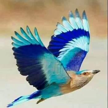 prabhakars147683_Western Province_Single_Female