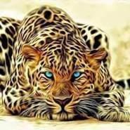 mageedh171663's profile photo