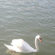 imane277114's profile photo