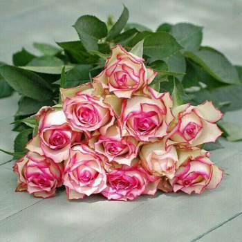 navids305936_Sindh_Single_Male