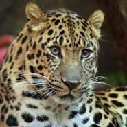 tigert311043's profile photo