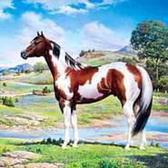 dakotar812166's profile photo