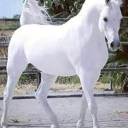asha137's profile photo