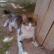 halimi216224's profile photo