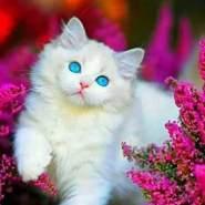 mariom733897's profile photo