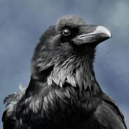ravent628755's profile photo