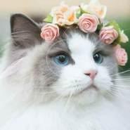 omarm033819's profile photo
